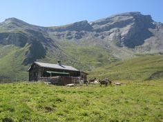 Auf der Alp unterhalb des Piz Beverin, Kanton Graubünden
