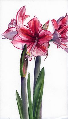 """Day 5,"" 14x8"" watercolor Botanical Illustration, Botanical Prints, Floral Watercolor, Watercolor Paintings, Flower Tattoos, Flower Art, Planting Flowers, Tattoo Ideas, Canvas Art"