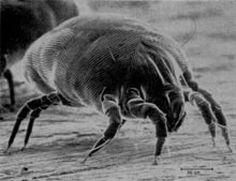 Polecam ciekawy blog poświęcony alergiom na roztocza kurzu domowego. Ciekawe treści, dużo wiadomości i porad jak skutecznie uwolnić się od alergenów tego pajęczaka dokuczliwego.