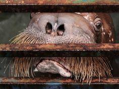 """""""Без вины страдаем мы, а вам в охотку  Обрекать нас видеть мир из-за решётки  Как горька длинною в жизнь пантомима  Мы не с волей, мы с тюрьмой несовместимы"""" . (Автор текста - Simphoniq  спешл фо Рита Гадар )"""