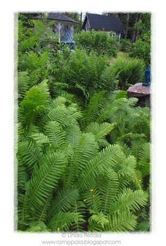 loving all the green ferns