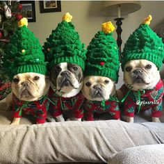 "20.3k Likes, 335 Comments - French Bulldog (@frenchie.world) on Instagram: """"How many Christmas trees do you think you need, mom?!"" @pixerella . . . . . #frenchie…"""