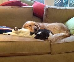 Pillow kitty...... its a pillow.. its a pet.