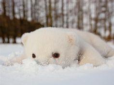 The polar bear cub, Siku