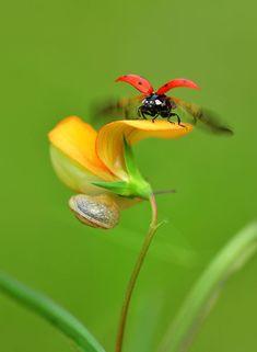 Resultado de imagem para insect