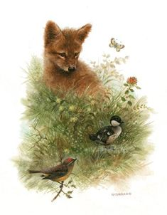 Belles illustrations wild life