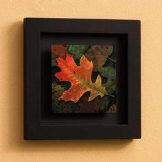Leave Me Oak Leaf Shadowbox by David Wenzel Print Open Edition Wild Wings http://www.amazon.com/dp/B00C9HQMEK/ref=cm_sw_r_pi_dp_-PMwub1GAMWTN