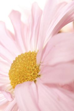 #pink, #floral, #photography