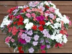 Hanging Baskets Tips.
