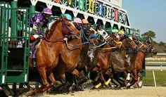 . Racehorse, Horses, Animals, Animales, Animaux, Animal, Animais, Horse