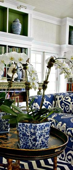 white orchids and blue and white pot