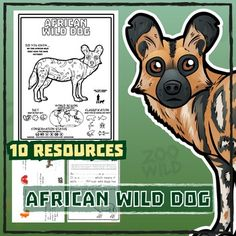 african wild dog 10 resources coloring pages reading activities