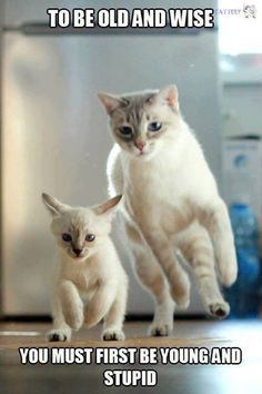 The one on the right looks like my Eartha Kitter. I miss her. ~K