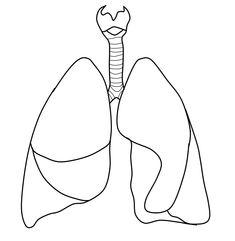 omalovanky ludske telo - Hľadať Googlom Respiratory System, Body Systems, Face And Body, Human Body, Preschool, Science, Kids, Tela, School