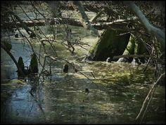 Bayou Scenery | photo