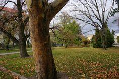 Autumn in Modra