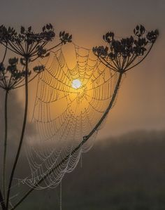 Love this spider web against a sunset... the dew drops, the color, the silhouette of the plants it clings to... beautiful.