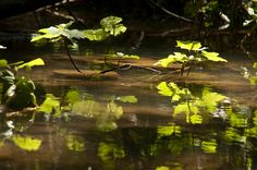 River Life  A Fine Art Photograph by DondiSchwartz on Etsy