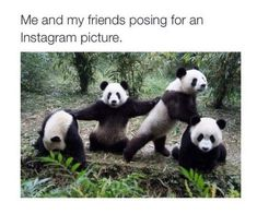 This is a selection of some of the most amazing Panda photographs out there. Will definitely make you to want to become a Panda yourself! most of them from the Panda Research Base in Chengdu. Koala Meme, Funny Koala, Panda Meme, Yoga Humor, Yoga Puns, Niedlicher Panda, Cute Panda, Bored Panda, Rock 7