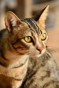 a tabby cat named Dead