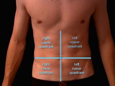 The abdominal region can be divided into four quadrants with the belly button as the central point.