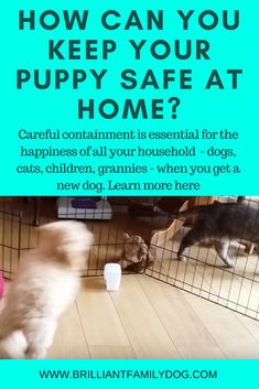 A doggy playpen has endless uses, on holidays and visiting friends as well as at home: read the post to get some ideas of what kind of puppy playpen you want, and how to use it for your new puppy and older dogs Dog Training Books, Training Your Puppy, Training Tips, Puppy Playpen, Puppy House, Puppy Care, Pet Care, Dog Teeth, Dog Care Tips