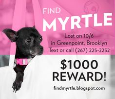 NYC PEEPS : #findmyrtle  Myrtle is a 6 pound, black chihuahua that went missing on Oct 6th in Greenpoint, Brooklyn. Please tweet, share on Facebook, hang posters and send love.    Sightings and leads have been sent in from Astoria, Bushwick and Canarsie. We aren't quite sure were she is, so putting up fliers in these neighborhoods is our best bet in finding Myrtle!