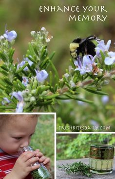 Rosemary for Memory: 3 Ways To Boost Your Memory That Do Not Require Lounging In A Rosemary Field)