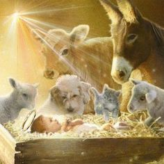 Simon Mendez - SM - nativity animals and manger Christmas Scenes, Christmas Nativity, Christmas Pictures, Christmas Holidays, Christmas Cards, Winter Pictures, Christmas Printables, Religious Pictures, Jesus Pictures