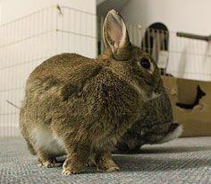 Pet Rabbits - Chewing & Digging - House Rabbit Behavior