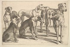 Wenceslaus Hollar (Wenzel Vaclav)  (Bohemian, 1607–1677). Six Hounds, 1646. The Metropolitan Museum of Art, New York. The Elisha Whittelsey Collection, The Elisha Whittelsey Fund, 1951 (51.501.1371) #dogs