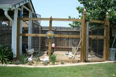 Nice Chicken coop with great ideas.