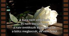 A buta nem emlékszik és… Einstein, Quotations, Life Quotes, Positivity, Motivation, Quotes About Life, Quote Life, Living Quotes, Quotes On Life