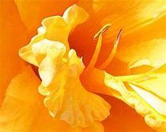 Georgia o O'Keeffe~Yellow Lily Georgia O'keeffe, Most Famous Paintings, Famous Artists, Georgia O Keeffe Paintings, Dry Brush Painting, New York Art, Arte Floral, Mellow Yellow, Colour Yellow