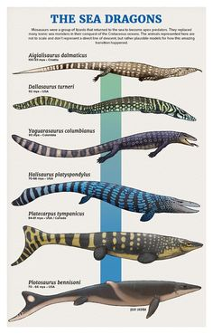 Evolution of sea dragons, or marine reptiles by Julio Lacerda. I'm really loving this guy's work! Prehistoric Wildlife, Prehistoric World, Prehistoric Creatures, Evolution, Dinosaur Art, Dinosaur Crafts, Sea Dragon, Extinct Animals, Animal Facts
