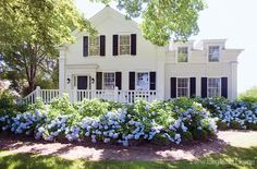 so cape cod...via made in heaven: white house and blue hydrangea