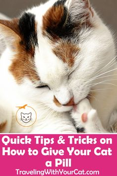 We researched a few tips and tricks on how to get a cat to take a pill. As cat owners ourselves, we have tried them. No method will transform pilling a cat into a cakewalk Cute Cats, Funny Cats, Angry Cat, Cat Sweaters, Cat Behavior, Cat Health, Cat Life, Giving, Beauty