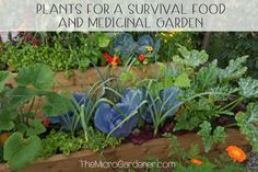 Learn how to start, plan and choose the best survival food & medicinal garden plants. Get a handy list of best edibles & plants to grow + 5 planning tips. Best Survival Food, Survival Prepping, Survival Gear, Fast Growing Vegetables, Best Edibles, Growing Microgreens, Edible Plants, Edible Garden, Healing Herbs