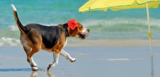 28 Dogs Feeling Fabulous at the Beach - Top Dog Tips