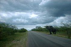 Elephant crossing South Africa, Wildlife, Elephant, Country Roads, Pictures, Photos, Photo Illustration, Elephants, Resim