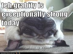 funny dog pictures - teh grabity is exceptionally strong today