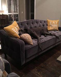 9 by Novogratz Vintage Tufted Sofa Sleeper II Multiple Colors