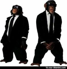 Humour Photos fun Singe in black Stupid Memes, Dankest Memes, Funny Memes, Reaction Pictures, Funny Pictures, Funny Animals, Cute Animals, Monkey Pictures, The Blues Brothers