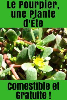 Le Pourpier, une Plante d'Éte Comestible et Gratuite ! Edible Wild Plants, Plantation, Nature, Terrarium, Bouquets, Diet, Gardens, Herbalism, Potager Garden