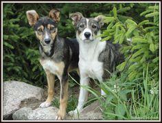 Dogs by MrsEfi on DeviantArt