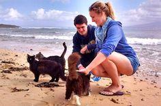 Gatti di Su Pallosu cat sanctuary in Sardinia has been named the top tourist destination on the island