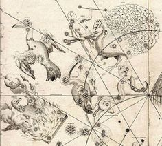 The 'Southern Birds' from Johann Bayer's Uranometria of 1603: Phoenix (a mythical phoenix), Grus (the crane), Tucana (the toucan), Indus (the Indian, a term that may have referred to a native of Asia or the Americas), Pavo (the peacock), and Hydra (the water snake). Image credit: Johann Bayer/Public domain.