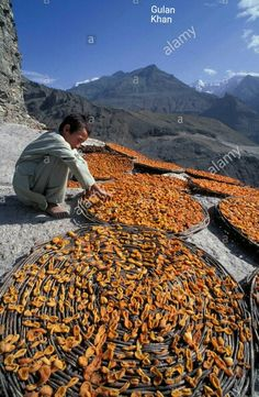 Awesome view of Apricots drying Hunza valley Gilgit Baltistan Pakistan Beautiful Hands, Beautiful Places, Hunza Valley, Gilgit Baltistan, Green Grass, Pakistan, Asia, Around The Worlds, Journey