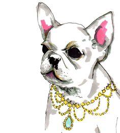 french bulldog portrait