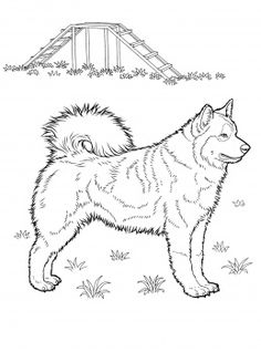dog color pages printable | Husky coloring page | Super Coloring